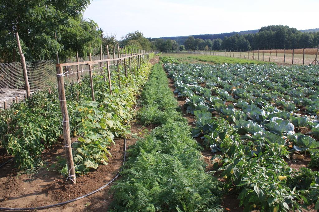 Start kertészet 2o12