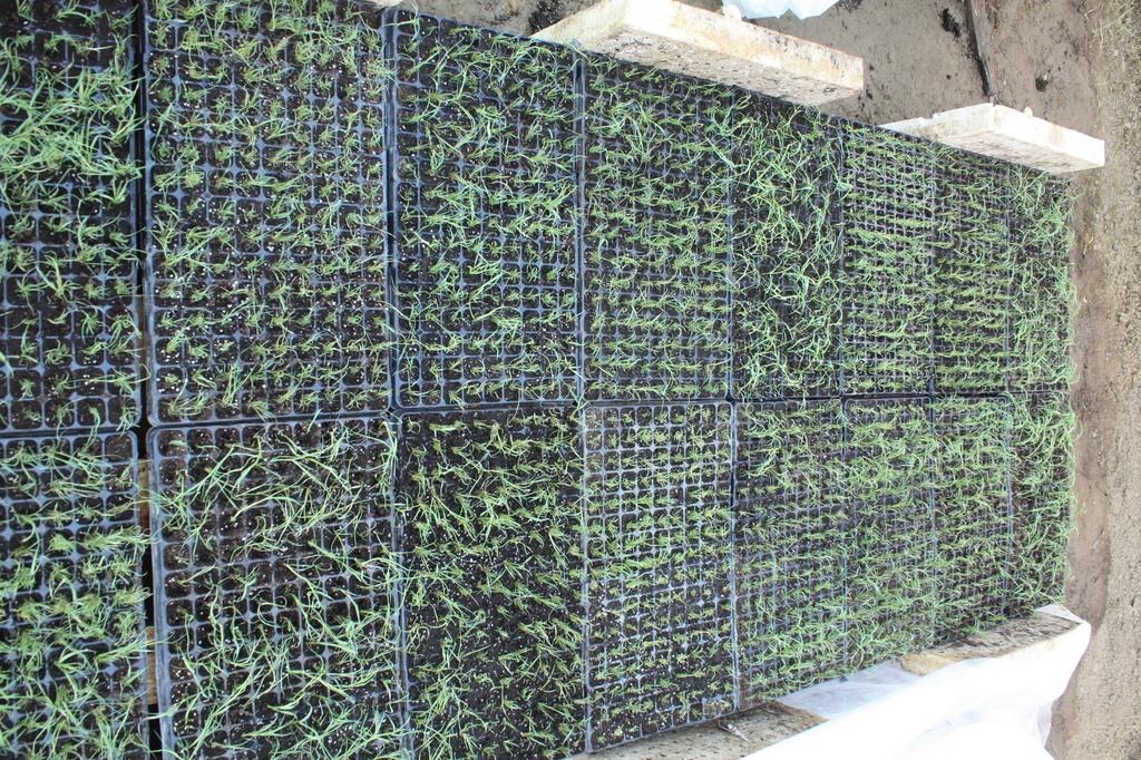 fátyolfóliás takarásra várva július 19