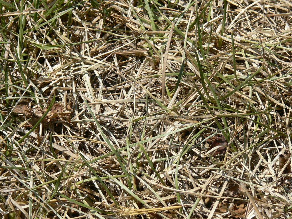 kisült a fű is